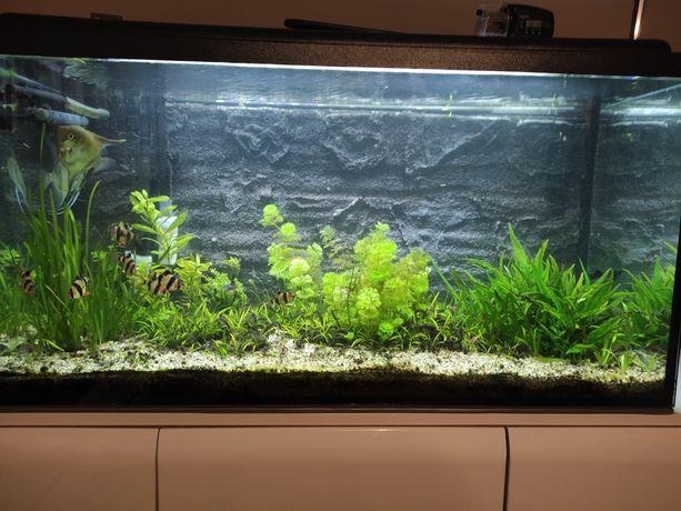 Akwarium 200l proste z pokrywą