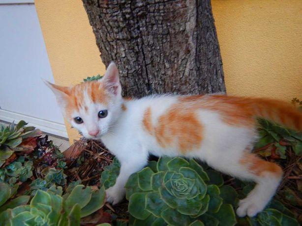 Gato amarelo e branco com 2 meses
