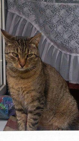 uwaga zgierz zaginł kot adoptowany ze schroniska medor aktualne