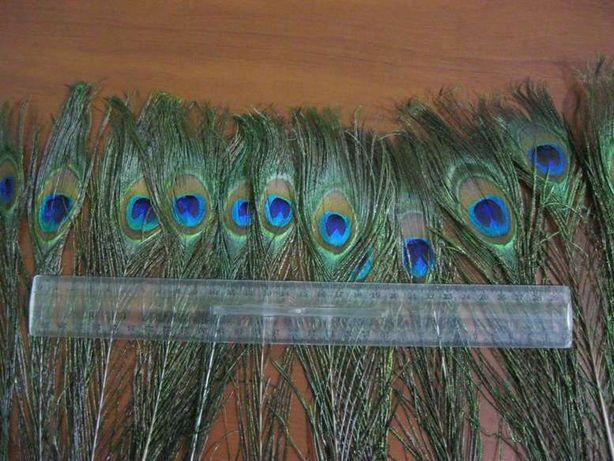 Перо павлина, хвост, павлиньи перья натуральные