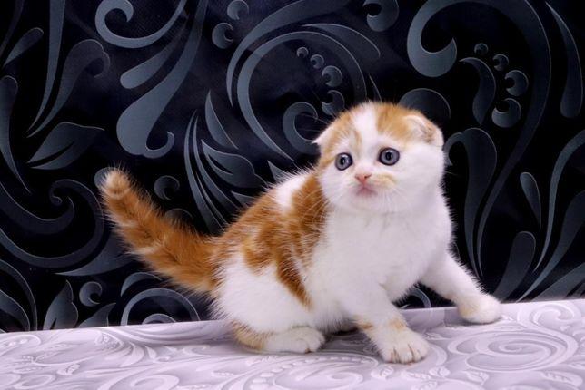 Солнечный котик фолдик