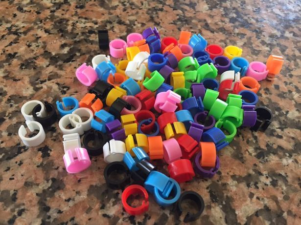 100 anilhas pombos correio coloridas