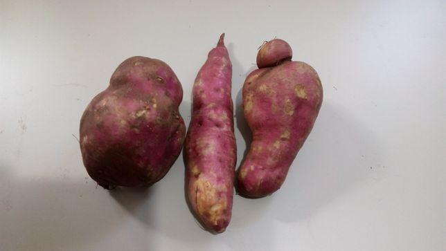 Продам сладкий картофель БАТАТ