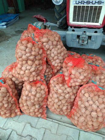 Ziemniaki odmiany gala