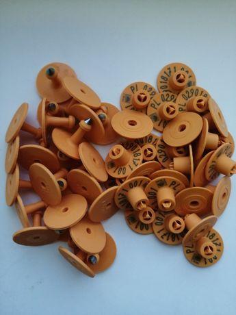 Urzędowe kolczyki dla trzody