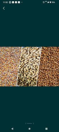 Купуємо зерно кукурудза ячмінь пшениця