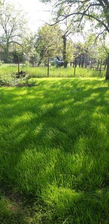 Альтернатива газону, Посев травы ПОЛЕВИЦА, минимальный уход, полив