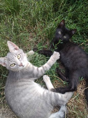Два красивейших и ласковых котёнка 4 мес. ищут дом!