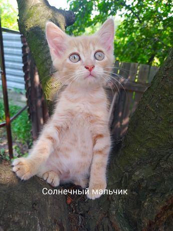 Ласковый котик в добрые руки