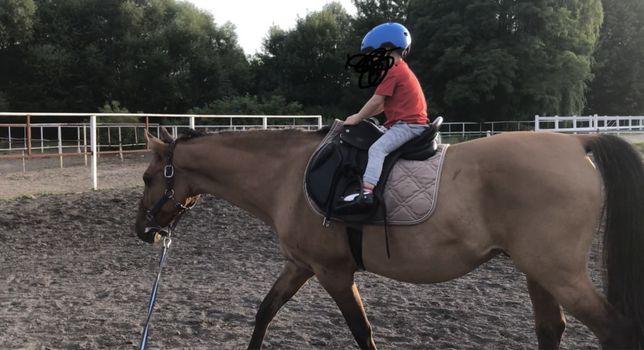 Koń do dzierżawy dla dzieci wydzierżawię pod siodło