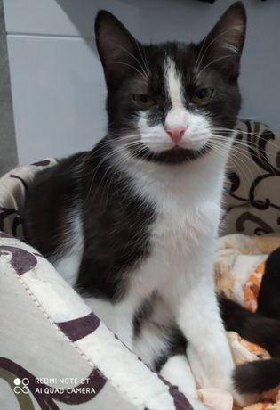 Котик (котенок) 7 месяцев Юлик