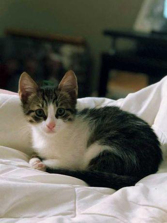 Трёхмесячный котенок в добрые ручки