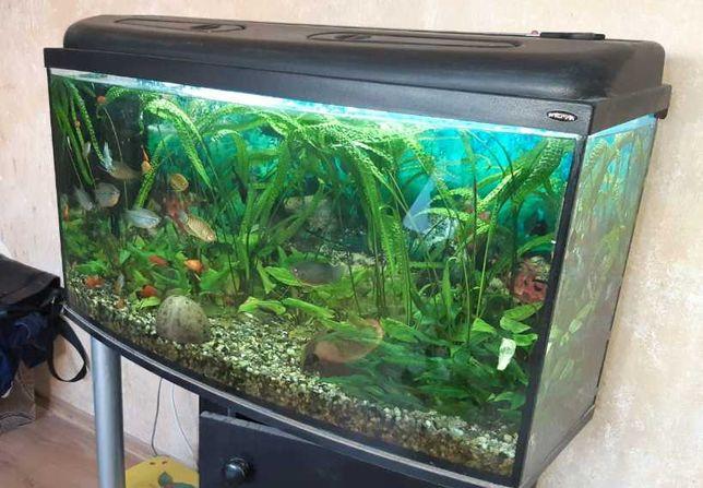 Akwarium + osprzęt + ryby