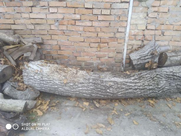 Дерево горіх продам