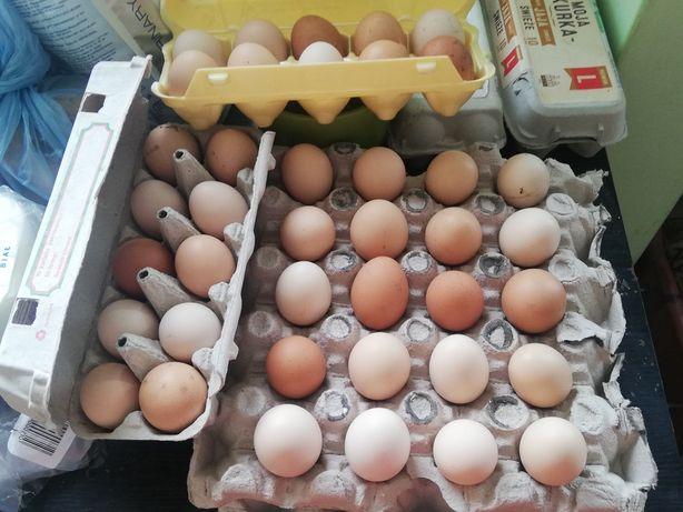 Jajka świeże wolny wybieg