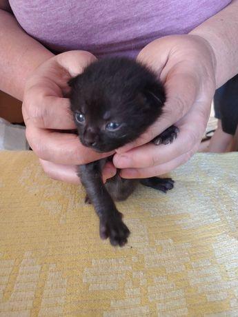 Котенята   чорні