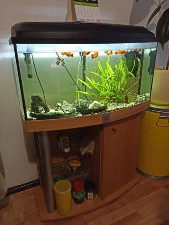 Akwarium 112 litrów wyposażone, z rybkami, roślinami i szafką.