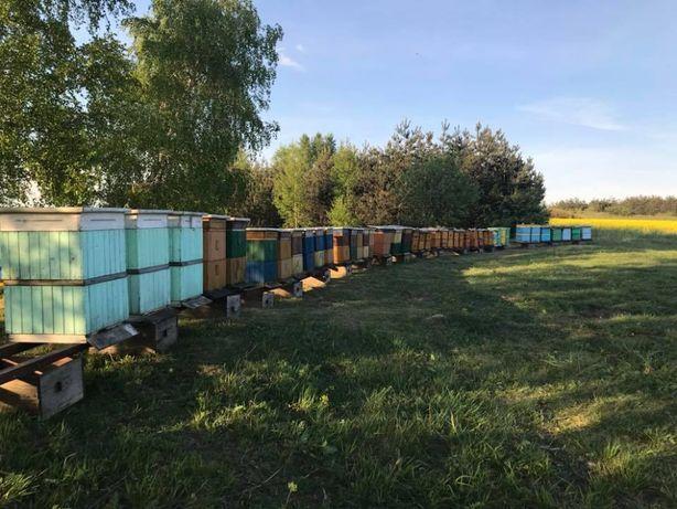Miód Pszczeli Oferta Hurtowa Wysyłka Dostawa GRATIS Promocja