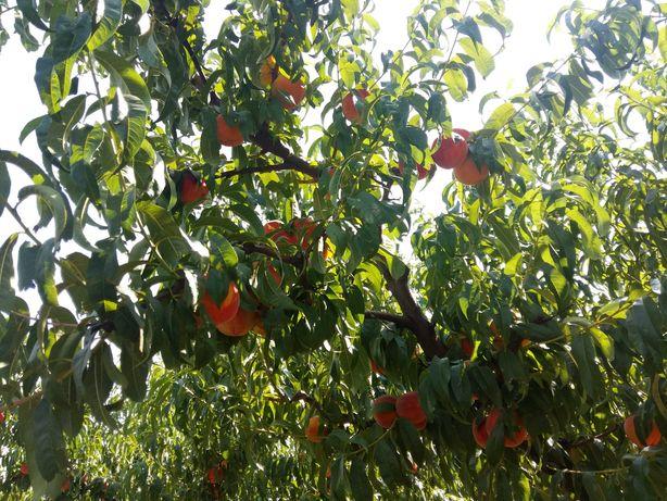 Обрезка деревьев плодовых, винограда и кустарников