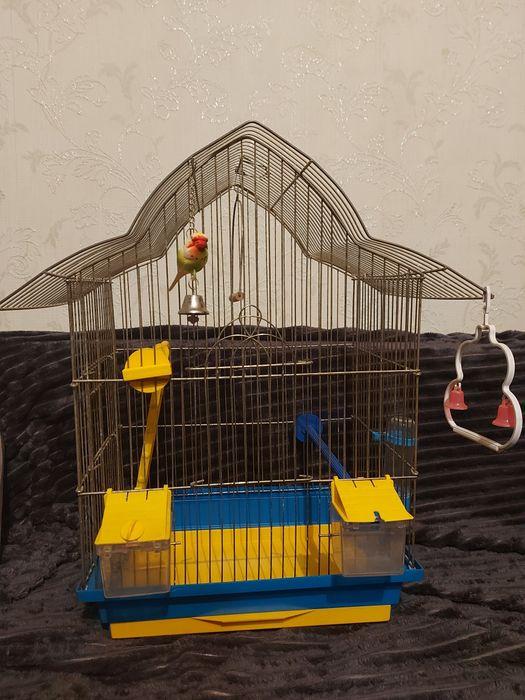 Клетка для попугая Киев - изображение 1