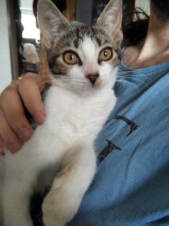 Śliczna pomarańczowo-oka marmurkowo-biała kociczka