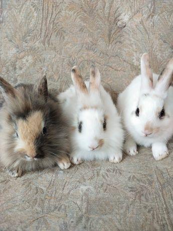 Sprzedam 5 pięknych królików mianiaturek