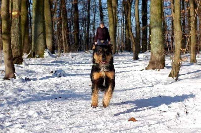 Oli super psiak szuka domu!