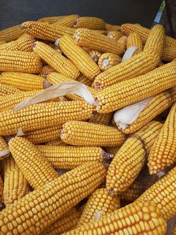 Продам кукурудзу