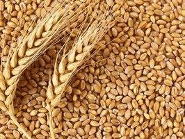 Пшениця Свіжий урожай