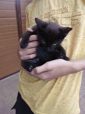 Koty kotki małe kociaczki