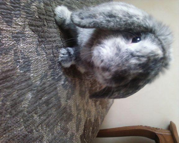 кролик-баранчик ильюша ищет подружку