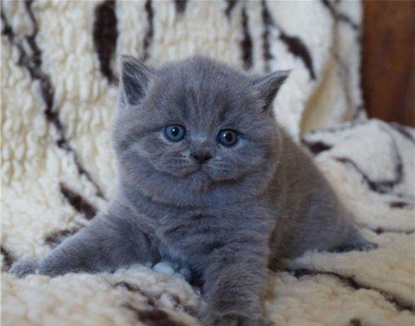 Плюшевые с документами котята ждут вас!