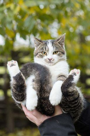 Очень красивый котенок ищет дом и добрые руки