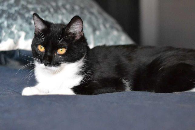 білогруда чорненька кішечка Мішка 7м