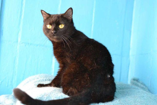 стерилізована  молоденька чорненька кішка 10м