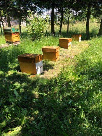 Odkłady pszczele