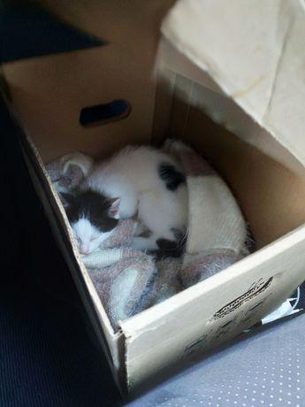 Gatinhos para adoção com 2 meses.
