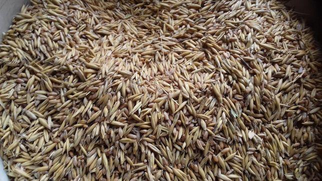 Mieszanka zbożowa jara- 4 zboża: pszenica, pszenżyto, jęczmień, owies