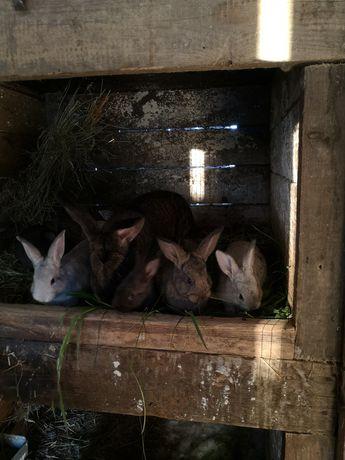 Młode króliki !!