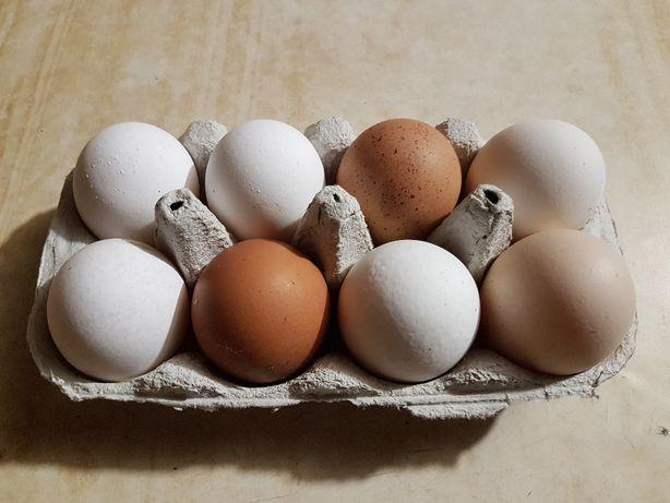 Jajka wiejskie -Bardzo smaczne jaja od kurek z wiejskich!!!