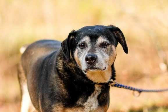 Pies Kufel szuka domu, czy ktoś go pokocha?