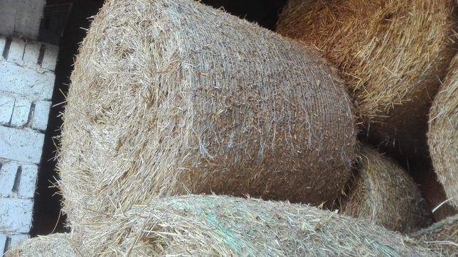 Słoma sucha z stodoły