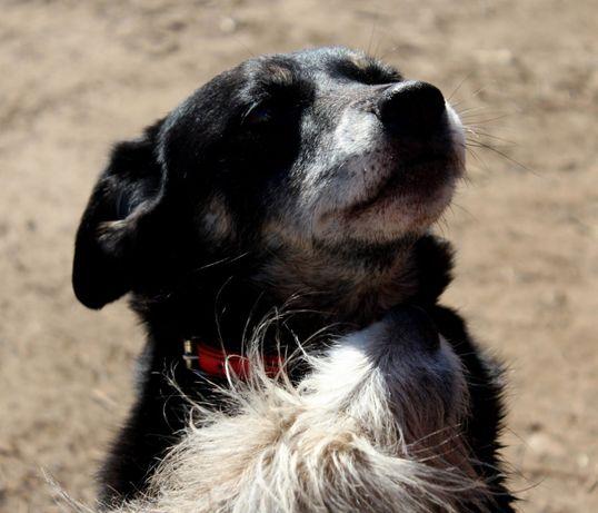 Molcia (pies ideal czeka na dom) Anna Grabo.