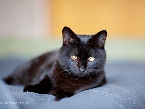 Спасите из приюта милого воспитанного кота кастрирован