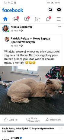 Zaginął kotek, proszę o informację gdyby ktoś widział