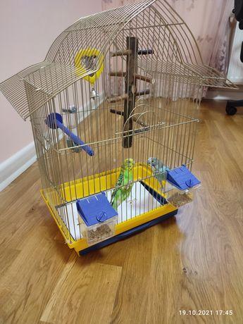 Молоді папугаї смугастики 2 шт.+клітка