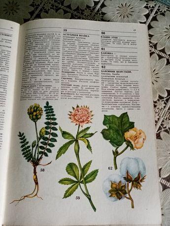 Продам энциклопедический справочник лекарственных растений.
