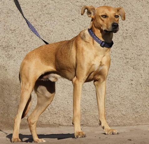 Ищу дом для собаки по кличке Рубин