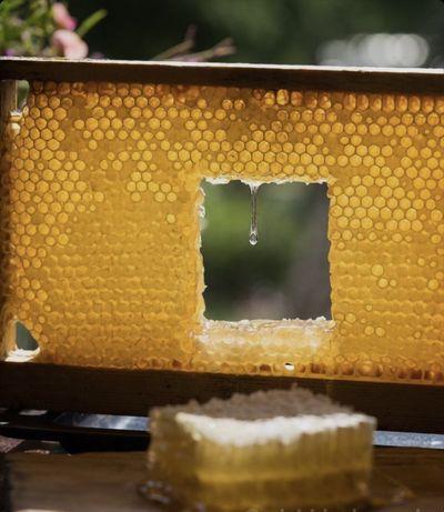 Натуральний мед! Пилок в подарок!