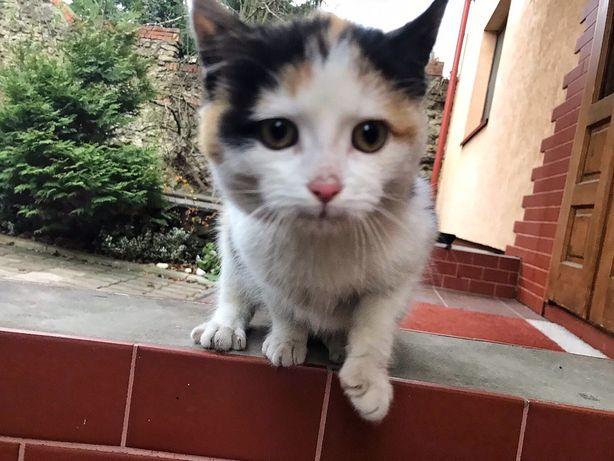 Отдаем бесплатно котенка девочку